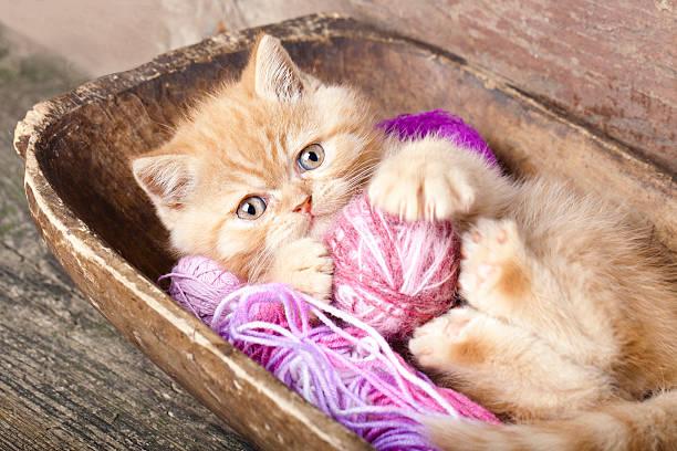 Kitten playing picture id178386964?b=1&k=6&m=178386964&s=612x612&w=0&h=ynb7vj6ghem0rpv6qj2ta gqdw vtsf3htqm8f7mpqe=