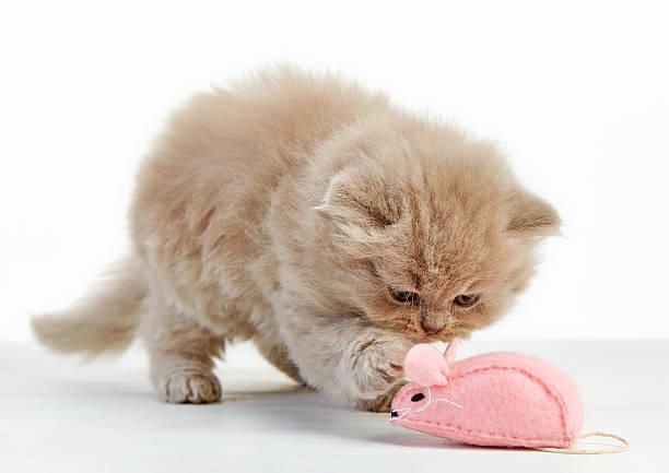 Kitten playing picture id483603814?b=1&k=6&m=483603814&s=612x612&w=0&h=obkr3wcqfjvmzffcwqo6h4u hocs f ov6bkhxrfl8q=