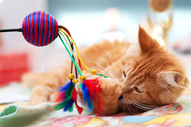 Kitten playing with ball and feathers picture id147243300?b=1&k=6&m=147243300&s=612x612&w=0&h=a1jelpjiazgkjo5ysycib2nhkur2sihpsd5wymymet8=