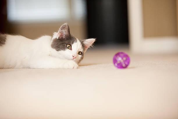 Kitten playing with ball on floor picture id489119840?b=1&k=6&m=489119840&s=612x612&w=0&h=c5tatwusqa5eduk1nvgt3sqh6whgcnoxshx65kg6dpa=