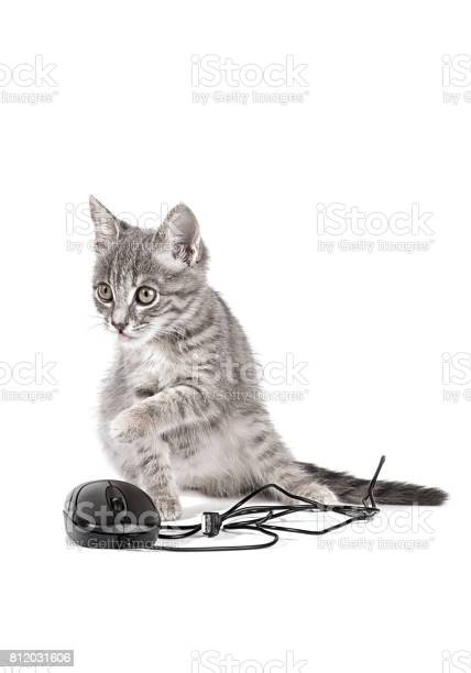 Kitten playing with computer mouse isolated on white background picture id812031606?b=1&k=6&m=812031606&s=612x612&h=sl bkbdu3vpk1wz5dt2o1vp3ahttgoga rkgjd5dnne=