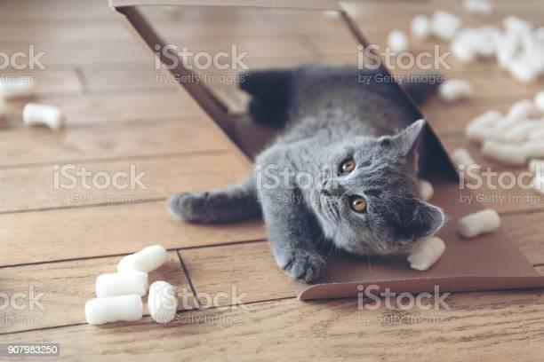 Kitten playing with packing peanuts picture id907983250?b=1&k=6&m=907983250&s=612x612&h=jqlh rxlwevklfax4gwg ttyuju9j3b96 r1qzntuhs=