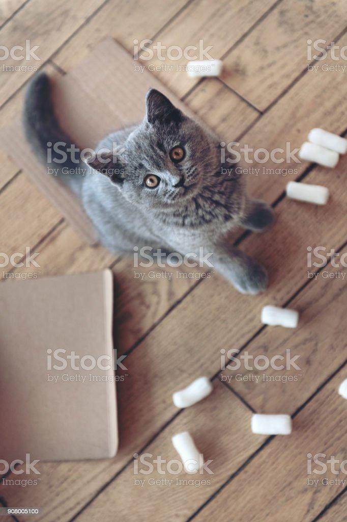 Kätzchen spielen mit Verpackung Erdnüsse – Foto