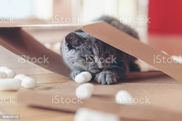 Kitten playing with packing peanuts picture id908005102?b=1&k=6&m=908005102&s=612x612&h=ixe6r4cw117maknk9 ptsk1qqac614 heseqi6ho0jm=