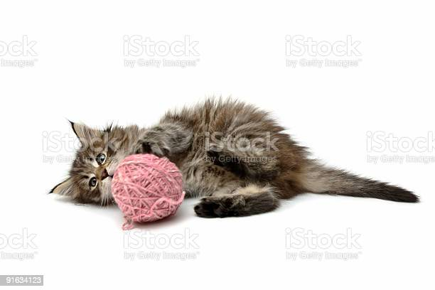 Kitten playing with pink ball picture id91634123?b=1&k=6&m=91634123&s=612x612&h=igisgttolajzapumbuc7dumelqgg5ic8x6ozqedhwle=