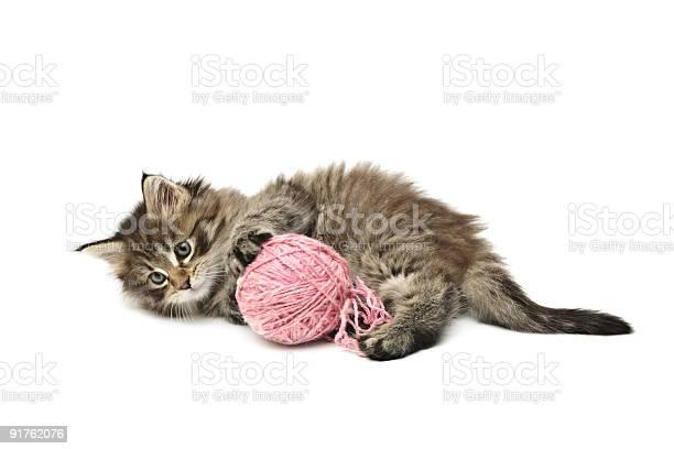 Kitten playing with pink ball picture id91762076?b=1&k=6&m=91762076&s=612x612&h=7nqqoboehtjccnelb4lqm13sezyn5owwnw3hsgieryw=