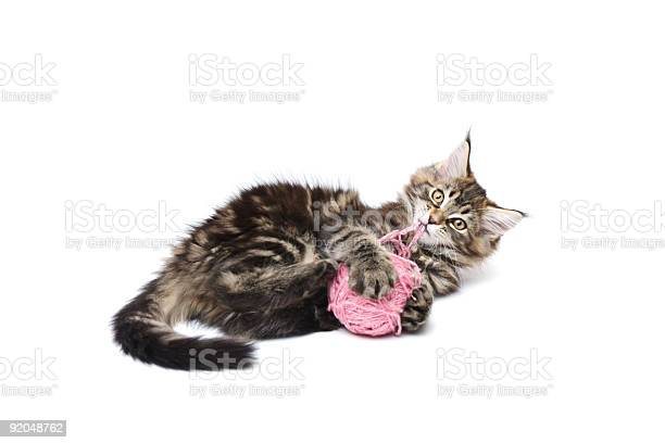 Kitten playing with pink ball picture id92048762?b=1&k=6&m=92048762&s=612x612&h=tvtm0fk00lydq4uzj ebsoxnty5p9ax7x8hnuyempga=