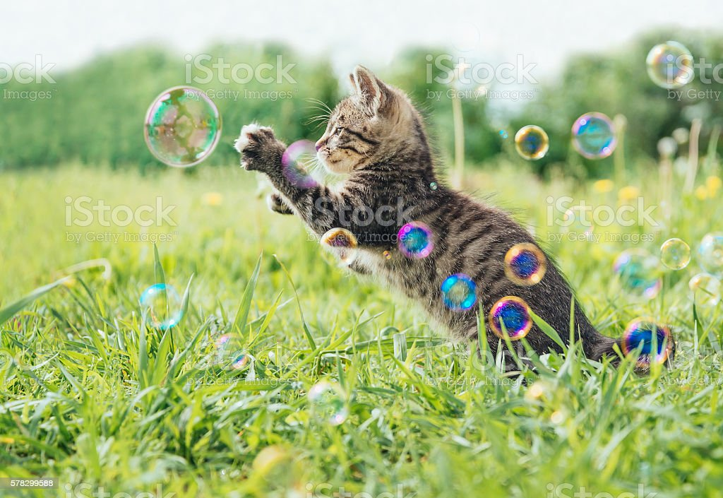 Kitten playing with soap bubbles stock photo