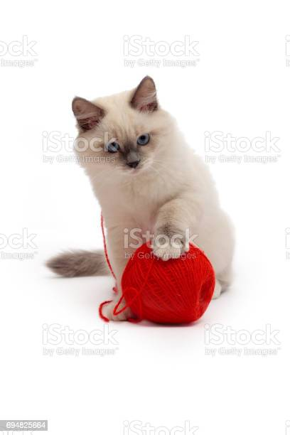 Kitten plays with a ball of red thread picture id694825664?b=1&k=6&m=694825664&s=612x612&h=geoxdfhqc5v1ofhhtfg mhthvtsgh 6nkkuuho9sjpg=