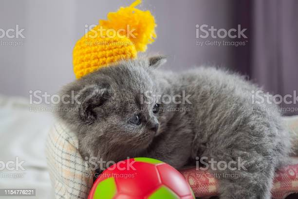 Kitten plays with a ball picture id1154776221?b=1&k=6&m=1154776221&s=612x612&h=a4h2intvxifu8z8mi axjbvsqats34pl21nomqw0j6s=