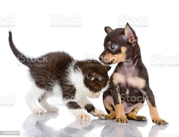 Kitten plays with a puppy picture id162959893?b=1&k=6&m=162959893&s=612x612&h=jtiewpyorxrl0wmo0jcoymsxt4o8rod gcr9brjh rq=