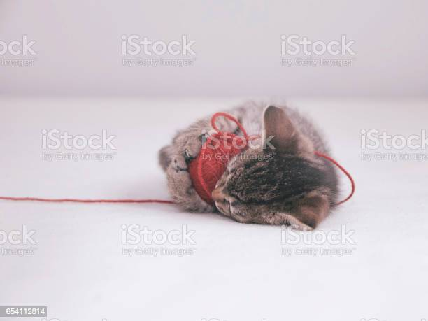 Kitten plays with tangle of red thread picture id654112814?b=1&k=6&m=654112814&s=612x612&h=bxhyoyrg2dawvobratsfqltz ncrqel0fmouvfg ajq=