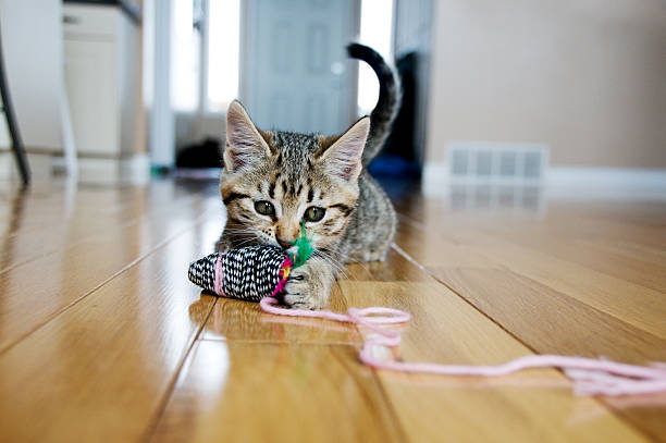 Kitten plays with toy mouse stock photo
