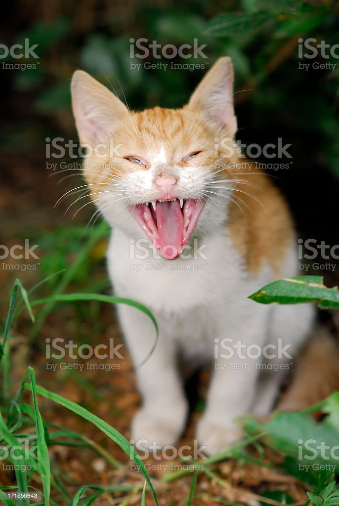 kitten portrait royalty-free stock photo