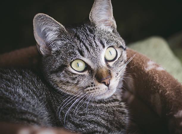kitten heel-porträt - jagdthema schlafzimmer stock-fotos und bilder