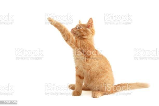 Kitten red playful picture id105871369?b=1&k=6&m=105871369&s=612x612&h=wtihiapxb i70zphbuyuu8thp7uk4ni7rqtwzt1npmi=