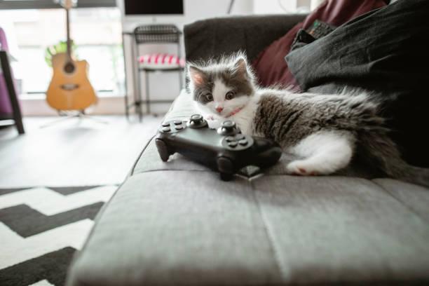 Kitten relaxing at home picture id1187104875?b=1&k=6&m=1187104875&s=612x612&w=0&h=ij376vhzusvnurokoaazs jru lmiwoidcyyycl o50=