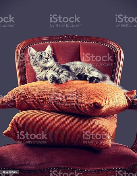 Kitten relaxing on a baroque armchair picture id464975469?b=1&k=6&m=464975469&s=612x612&h=swjnnvfcdaarsknflyoayi1tzssgcx8vekltsxguflw=