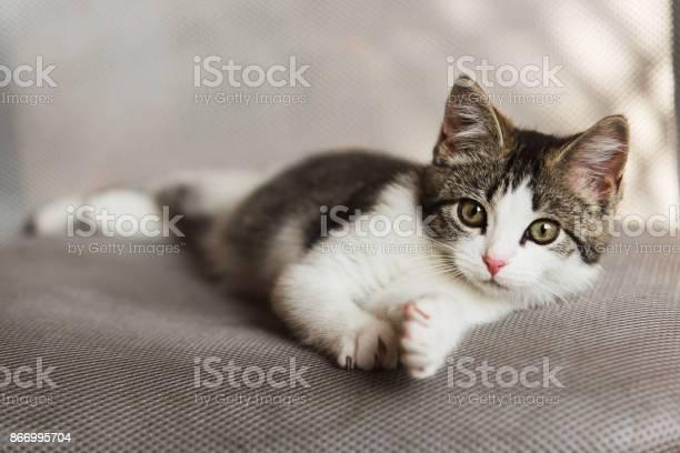 Kitten relaxing on sofa picture id866995704?b=1&k=6&m=866995704&s=612x612&h=dg4p7rxxgsnbstd qsmwpuwntcfixp7ia5lgywjurk0=