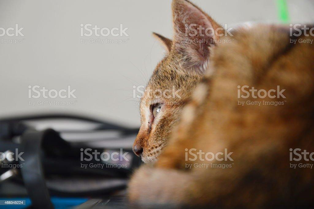 kitten roll up royalty-free stock photo