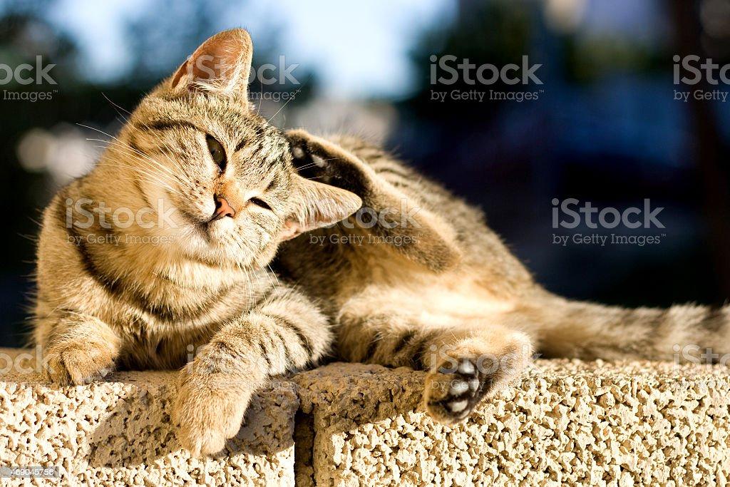 Kitten scratching stock photo