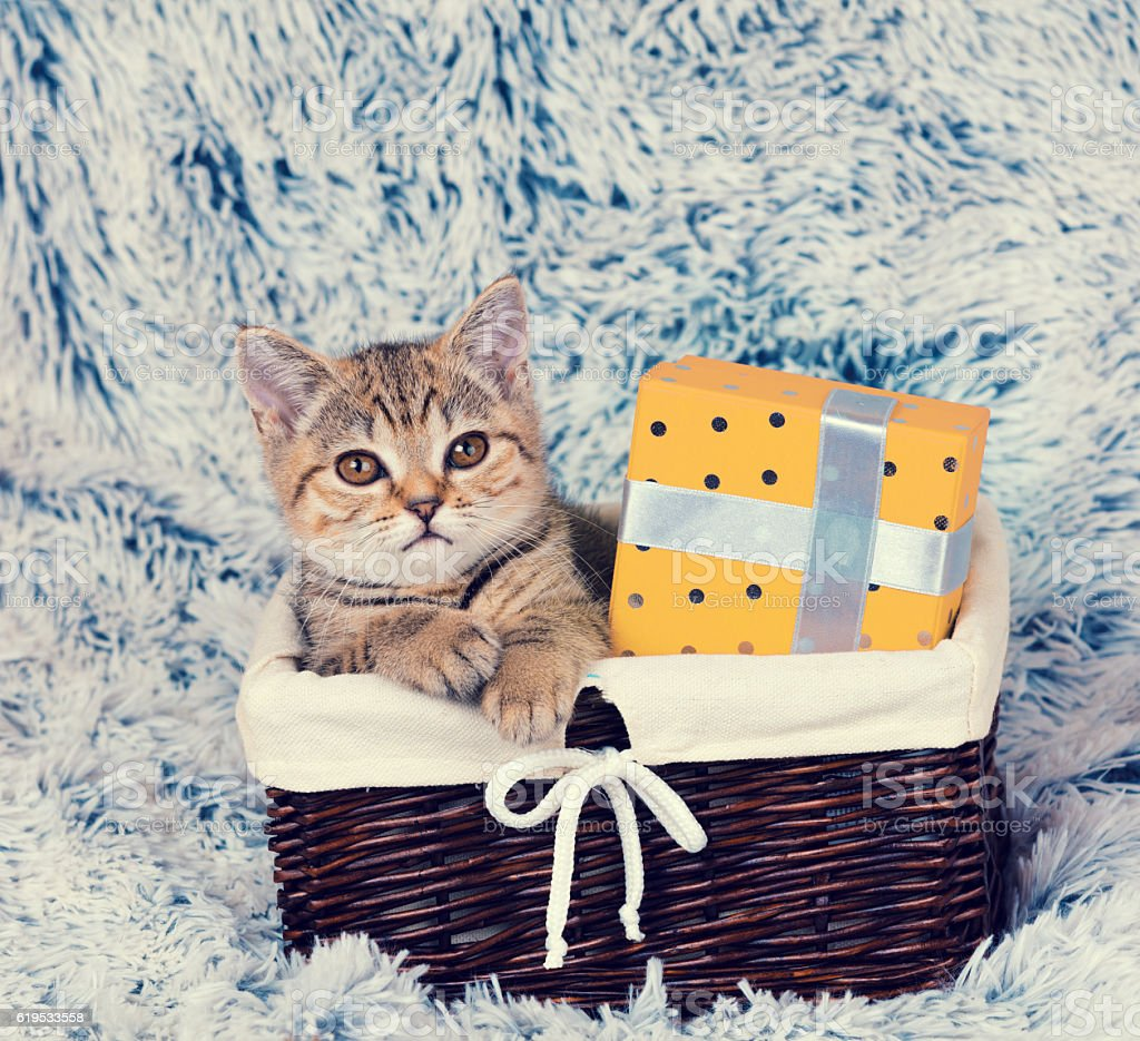 kitten sitting in a basket with present box stock photo