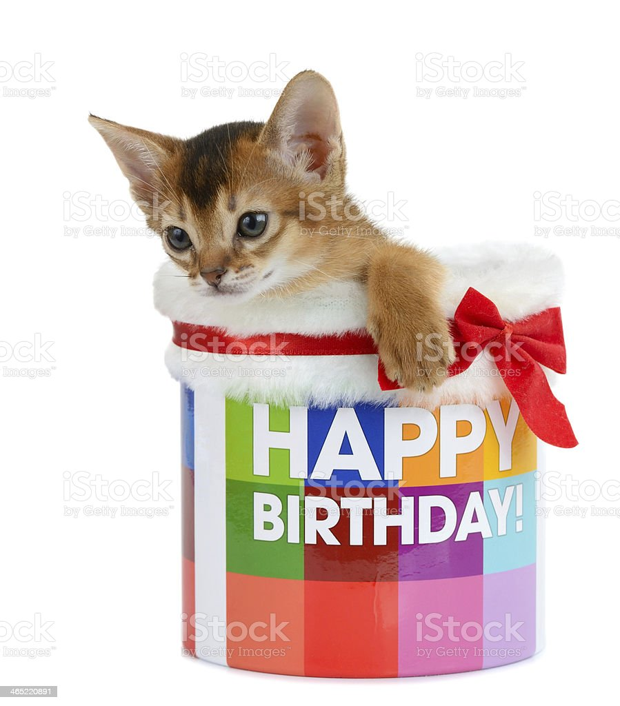 Katzchen Sitzen In Einer Happy Birthday Bucket Lizenzfreies Stock Foto