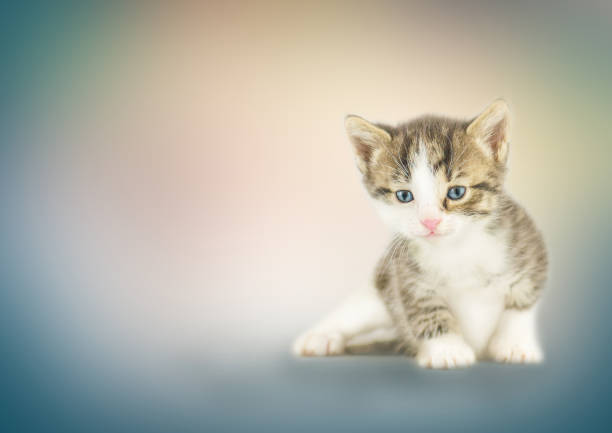 Kitten sitting on bokeh background picture id824620330?b=1&k=6&m=824620330&s=612x612&w=0&h=jrvbcsawjpo r4ivzfyhqcl0hrgigyapznnutvkgnli=