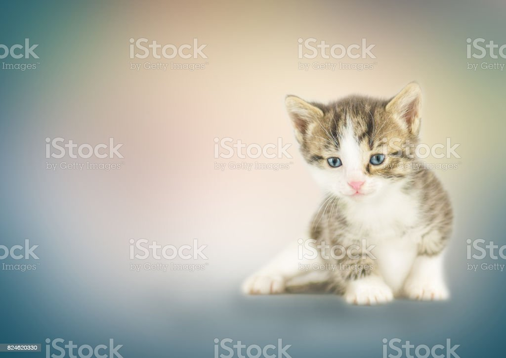 Chaton assis sur fond de bokeh - Photo