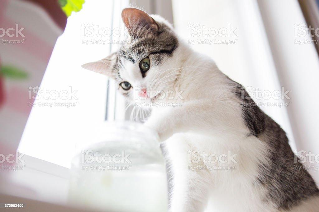 Kitten sitting on the window stock photo