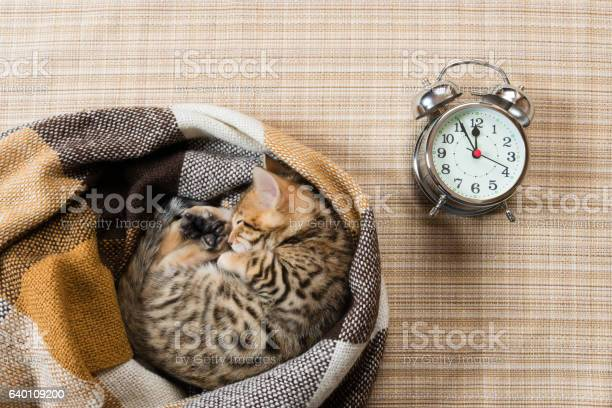 Kitten sleeping in a plaid blanket with a clock picture id640109200?b=1&k=6&m=640109200&s=612x612&h=7k ddkmc0ndey9dbd9j5hxbmznmfngmv4xvypc elwq=