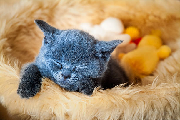 Kitten sleeping in basket picture id482068396?b=1&k=6&m=482068396&s=612x612&w=0&h=nle7 7f4auw2s24zckqjhx2kagrfujhlcmyjybfvfis=