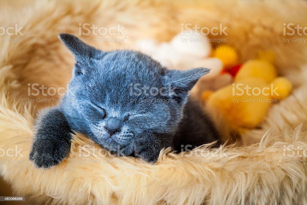 Kätzchen Schlafen in den Korb – Foto