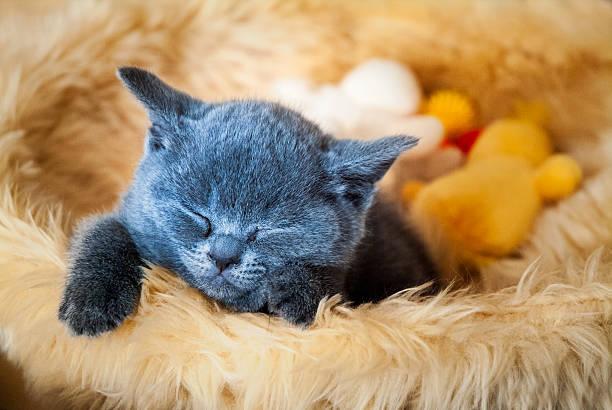 kätzchen schlafen in den korb - katzen kissen stock-fotos und bilder