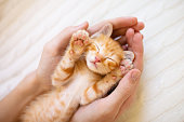 Kitten sleeping in man hands. Pet owner and his cat. Cozy sleep and nap time with pets. Ginger baby cats relaxing. Animal love.