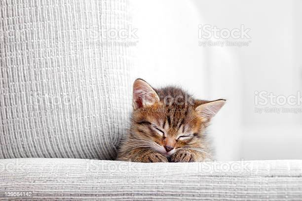 Kitten sleeping on a gray couch picture id139564142?b=1&k=6&m=139564142&s=612x612&h=i 7ny tv618 mget7ojyiqdhghdtrzruwnulahb56sm=