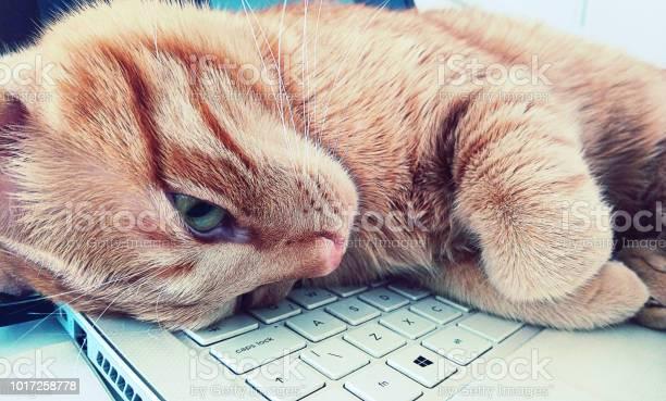 Kitten sleeping on a keyboard picture id1017258778?b=1&k=6&m=1017258778&s=612x612&h=9tpnsjwpejq0uddoynd7cxfdjeg1ml9geuhd8yyknk8=
