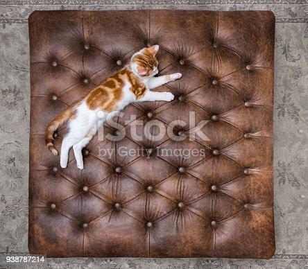istock Kitten sleeping on a luxurious leather footstool ottoman 938787214