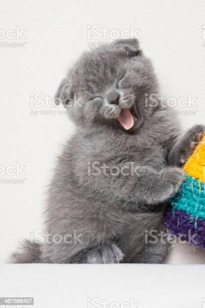Kitten sleeping on a small pillow picture id487568457?b=1&k=6&m=487568457&s=612x612&h=rxcnk0 i 4my khhpps5p9b5fmryt4qty8hhakxu6rc=