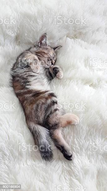 Kitten sleeping on a soft wool picture id600166904?b=1&k=6&m=600166904&s=612x612&h=yw 1hoxqfnf0z8yx9vbwi2b8ox80jkbge0foe3kvv6e=