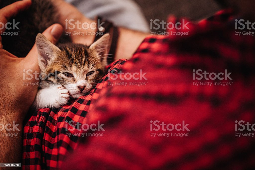 Kitten sleeping peacefully on a man's lap at home stock photo