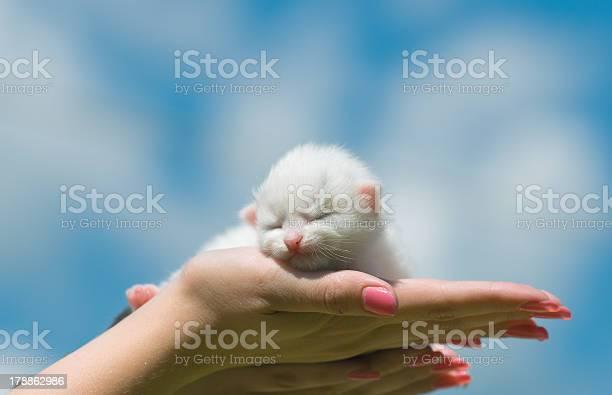 Kitten sleeping picture id178862986?b=1&k=6&m=178862986&s=612x612&h=hny86fjoijhqb7hxofso3fstwouwcklcyrgtofb02gi=