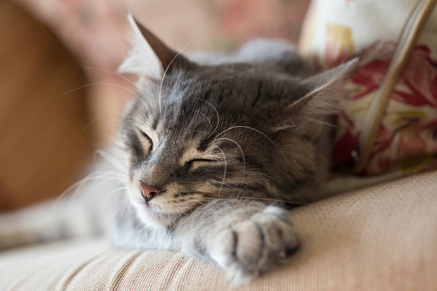 Kitten sleeping picture id478801178?b=1&k=6&m=478801178&s=612x612&w=0&h=pcfh1sgobt6janocg n7hov2wzogenmnq7ntajkmchg=