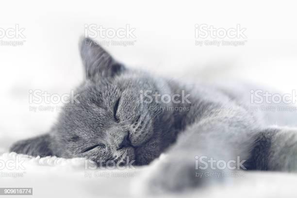 Kitten sleeping picture id909616774?b=1&k=6&m=909616774&s=612x612&h=yenycdevn83nxq 9k5sgtrcklpug9jzonhzd4mvahzm=
