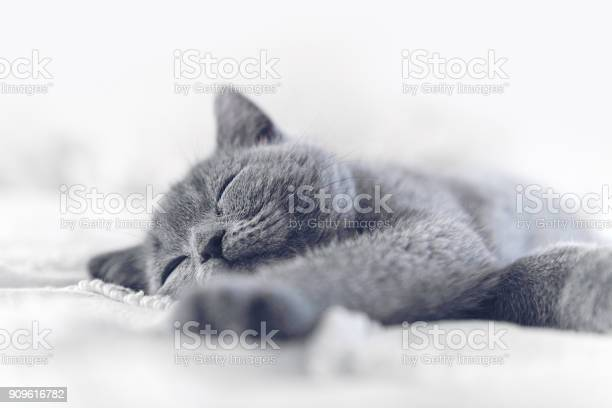 Kitten sleeping picture id909616782?b=1&k=6&m=909616782&s=612x612&h=wvmjmbwsdrv8yf9g2srllk yf724xqmq7hbf9bmzrks=