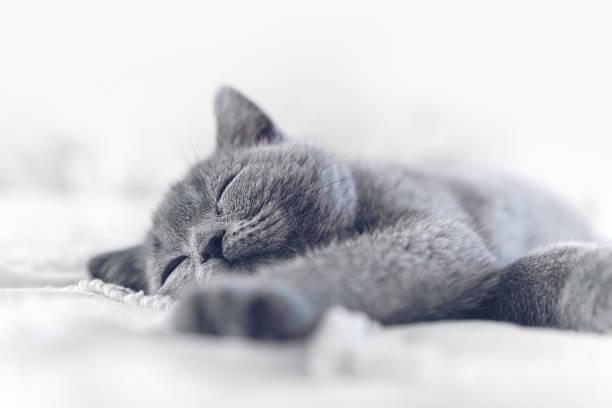 Kitten sleeping stock photo