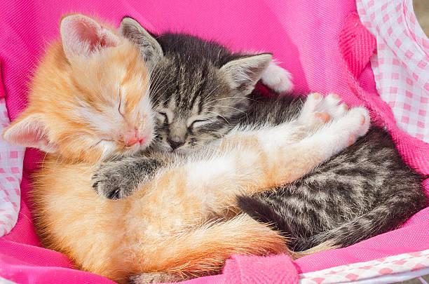 Kitten sleeping together picture id479804902?b=1&k=6&m=479804902&s=612x612&w=0&h=hejuc5zh7k3jnylv8fdma4g kwryrpdqdaohwy6vlgs=