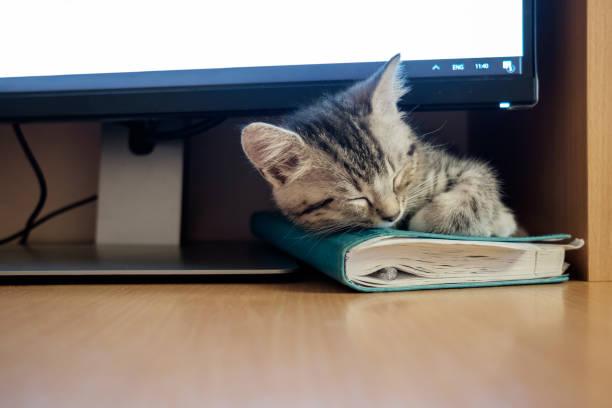 Kitten sleeping under computer monitor picture id1005874748?b=1&k=6&m=1005874748&s=612x612&w=0&h=xavnmuvgorjqwnfleoyf5flvrcqd00zu9u6zv885mzw=