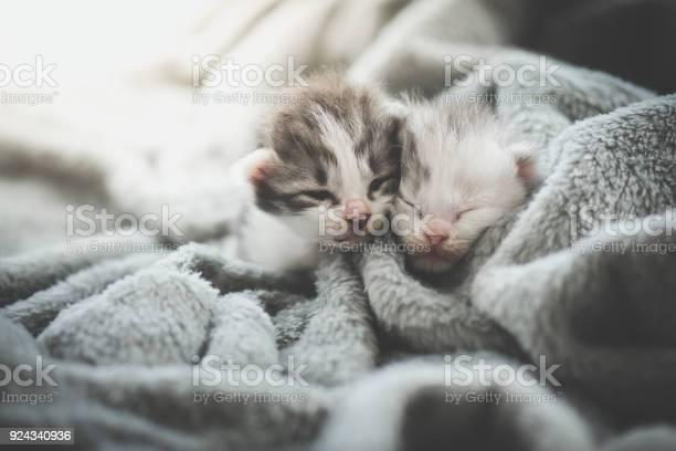 Kitten sleeping under wool blanket picture id924340936?b=1&k=6&m=924340936&s=612x612&h=rxbuppofs284o2umia0xzdw4zfd11xewnmx1dwna ky=