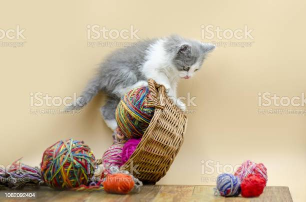 Kitten sleeping with colorful wool yarn balls picture id1062092404?b=1&k=6&m=1062092404&s=612x612&h=30pdtuzlf 6asthdd8kklf22f4me40yhy5jonskqy8u=